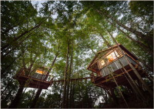 A Canopy Crew tree house at night