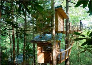 A Canopy Crew tree house